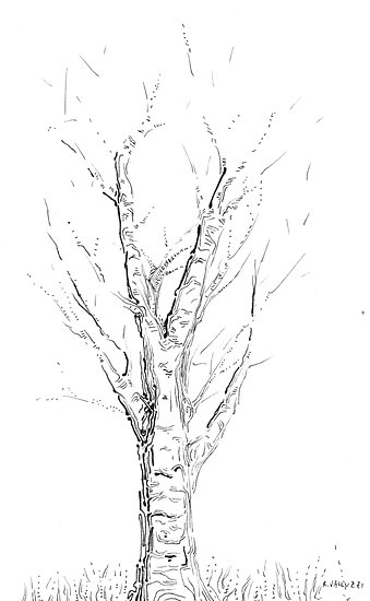 branches and trees