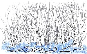 birch inspired patterned landscape